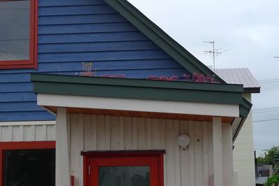 屋根のセダム.JPG