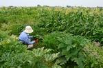 zucchini1.jpg