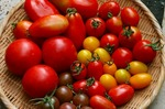 tomatoiroiro.jpg